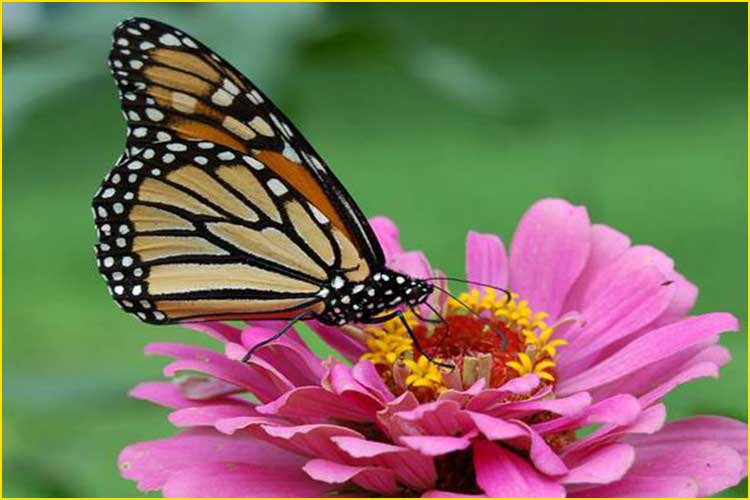 summer flower with butterfly